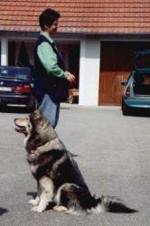 Hundeerziehung Laserdogs
