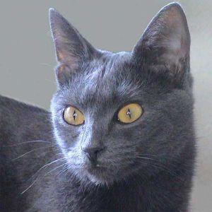 lasercats-clickertraining-katze-easy